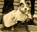 Sergeant Stubby Photo
